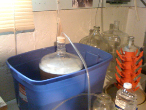 Fermentation: Summer Wheat